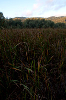 Grasses on Middle Searsville Lake
