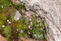 Flowers with Granite