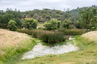 Pond at Melchor Ranch