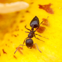 5/16/2015 Spring Ant Survey