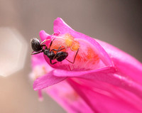 Ant into Flower