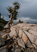 Granite, Silver Pine, Dawn Light