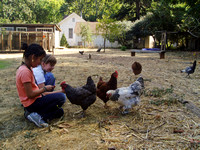 031023girls_feeding_chickens_a_yeswehavepermission_dq