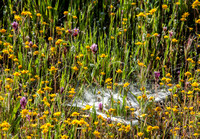 Spider Web among Flowers