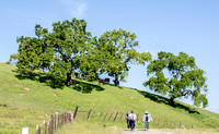 Hikers & Cattle at Rancho San Vicente