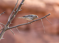 Bird in Fiery Furnace