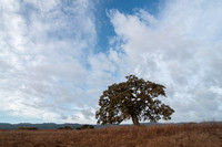 Lone Valley Oak and Windy Hill