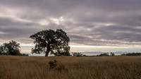 Lonely Valley Oak and View of Bay