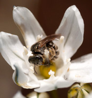 5/5/2012 Ant Survey: small flowers & insects