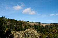 Windy Hill & Spring Ridge from Toyon Trail