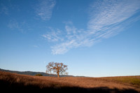 Lonely Valley Oak at Moonset