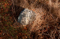 Stone in Grass