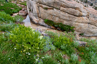 Spring Flowers along Mountain Stream