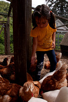 110419girl_feeds_chickens_dq