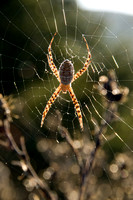 Spider in Web (2)