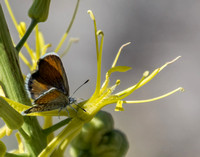 Butterfly on Flowers at Jackrabbit Springs