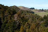 Windy Hill from Toyon Trail