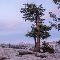 Silver Pine, Alpenglow