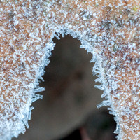 Frosty Leaves up Close