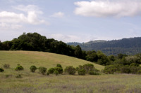 Grassland, Oaks, Windy Hill