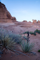 Desert Plants with Delicate Arch